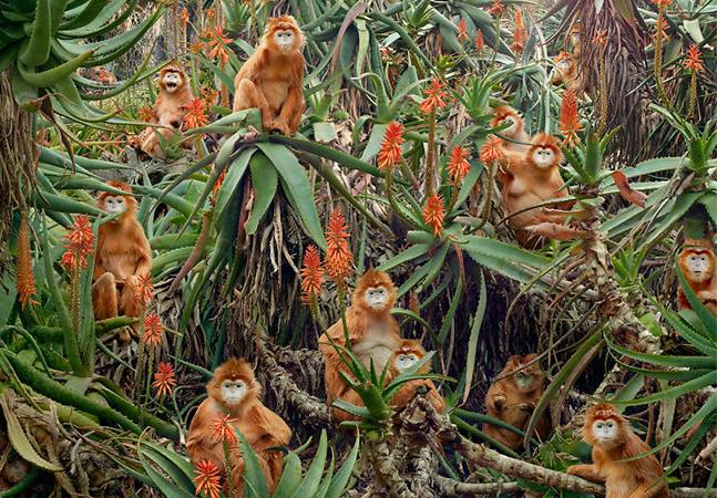 Fotógrafo inventa cenas surrealistas tomando animais como inspiração