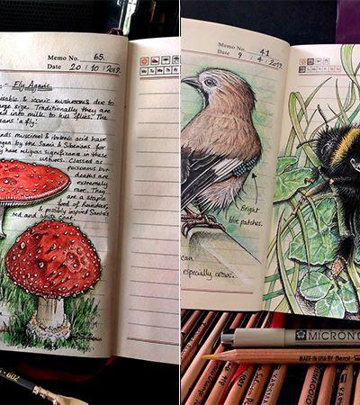 Ela registra as coisas que descobre na natureza em desenhos totalmente maravilhosos
