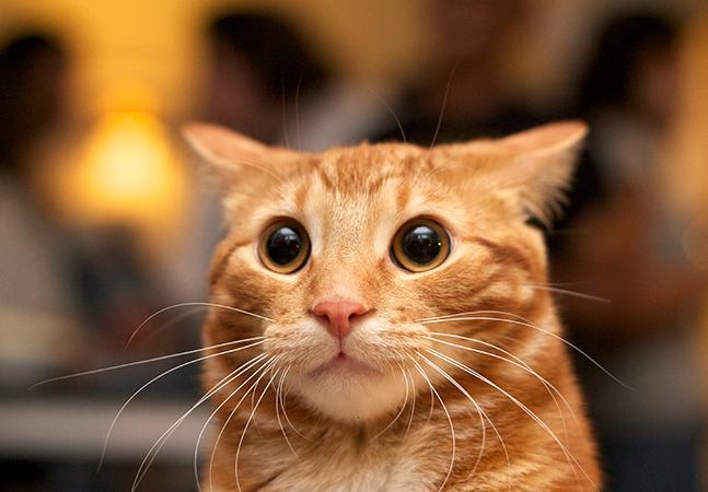 Gato de Cuiabá é comprovadamente o 1º contaminado com Covid-19 no Brasil