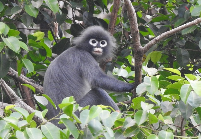 Nova espécie de macaco descoberta existe há pelo menos 1 milhão de anos