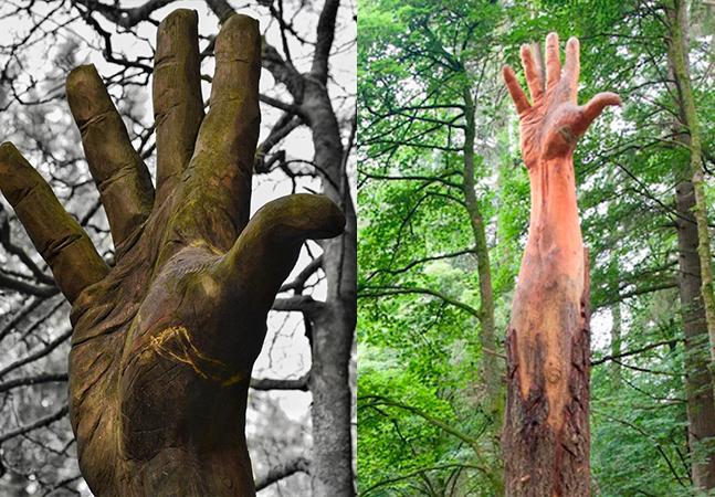 Árvore danificada vira escultura em que a Terra parece pedir socorro