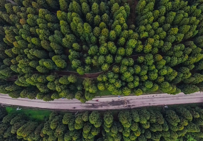 China surpreende com florestas capazes de absorver mais poluentes que o esperado
