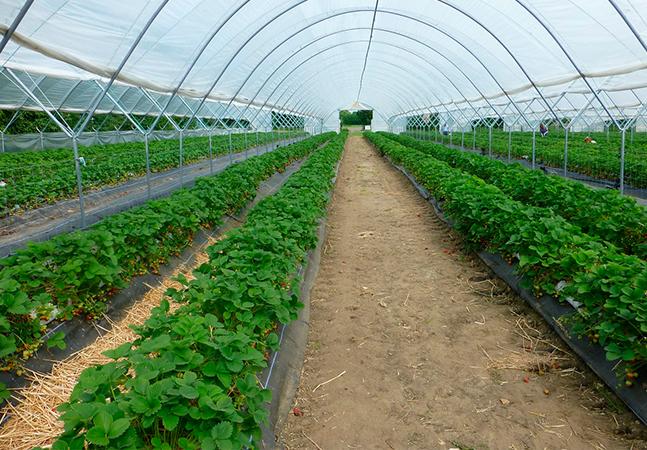 Estudo mostra que agricultura urbana local poderia alimentar toda São Paulo