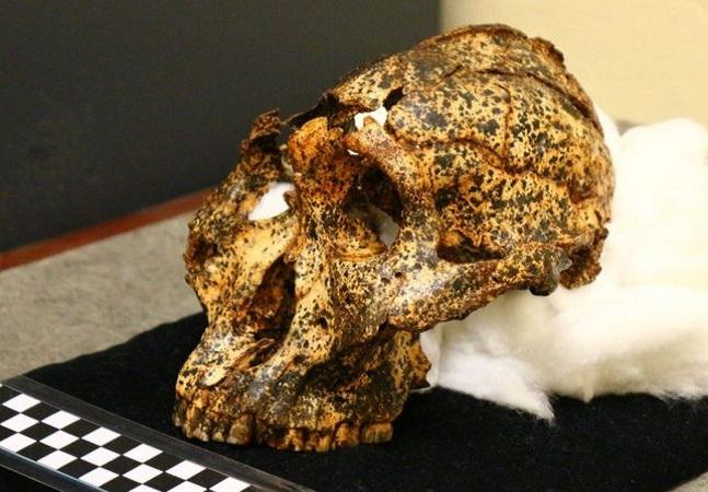 Crânio 'primo' dos humanos com mais de 2 milhões de anos dá novas pistas sobre evolução
