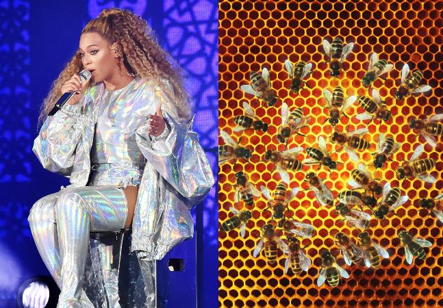 Beyoncé cria 80 mil abelhas em casa e você pode fazer o mesmo