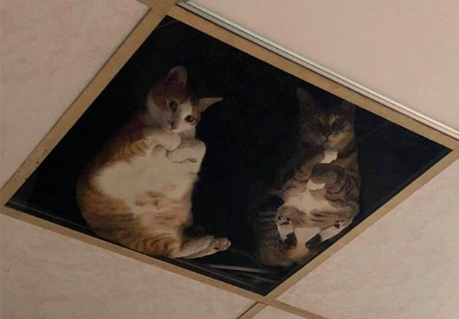 Dono de loja instala teto de vidro para seus gatos e agora é espionado por eles