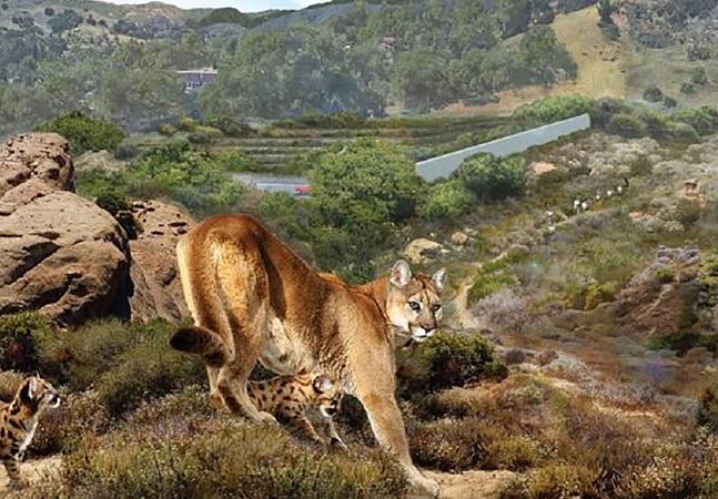 Los Angeles constrói maior ponte de animais do mundo para proteger pumas