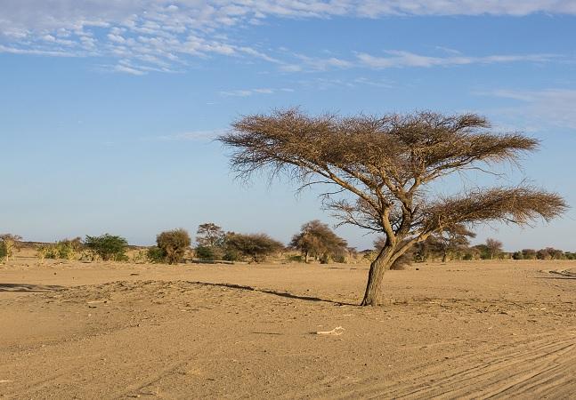 Satélite acha 'floresta' no meio do Saara com quase 2 bilhões de árvores