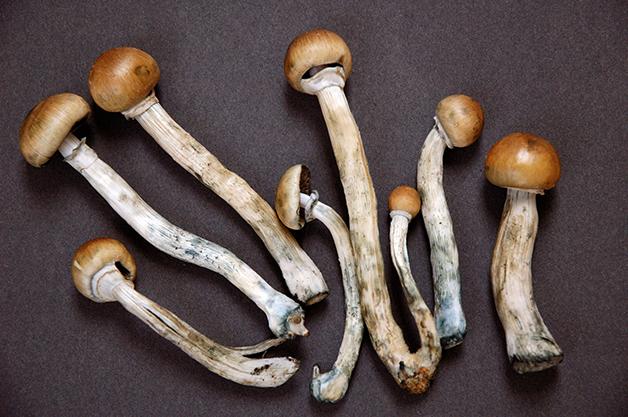 8d45bf87-edit_magic_mushroom_4.jpg