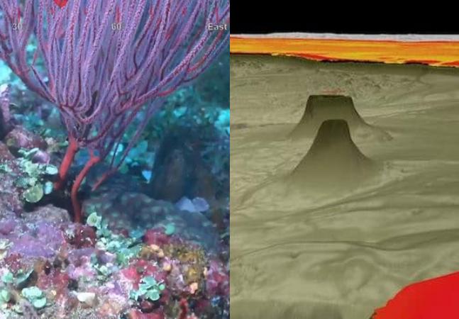 Novo recife de coral recém descoberto é maior que o Empire State Building