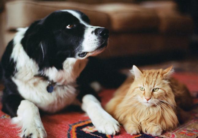 Cães e gatos não transmitem Covid-19, diz veterinário brasileiro de universidade dos EUA