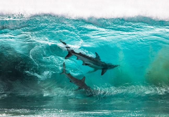 'Tubarões surfistas' e 'baleia bailarina': as melhores fotos oceânicas de 2020