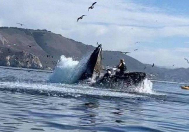 Baleia jubarte vira caiaque após observadoras chegarem perto demais