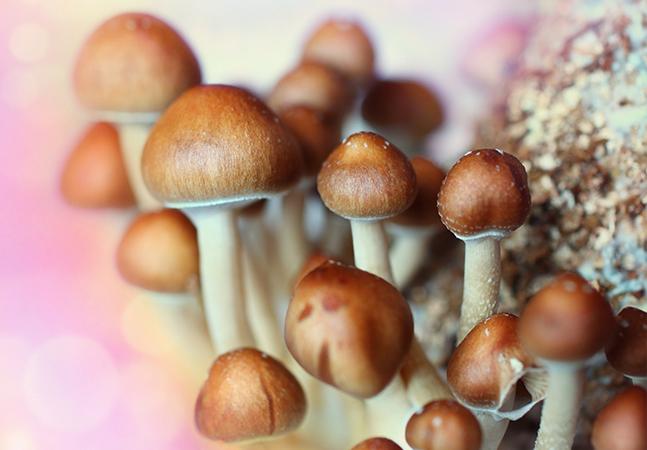 Cogumelos mágicos são usados como terapêuticos contra a ansiedade de pacientes em estado grave no Canadá