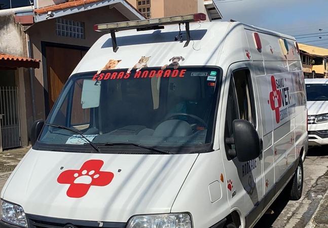 Van que levava 70 gatos resgatados e dois voluntários é roubada em estrada