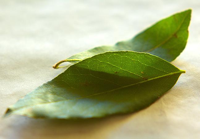 Folhas de louro melhoram o astral, relaxam, ajudam a digestão e combatem à acne