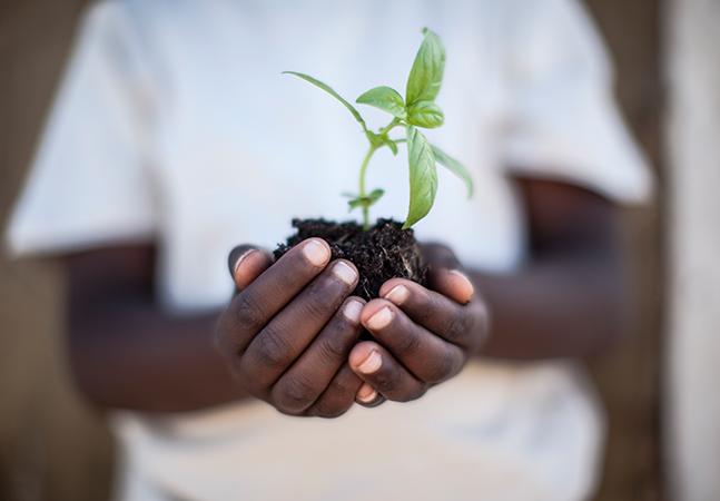O que é a alfabetização ecológica e como ela pode criar um futuro mais sustentável