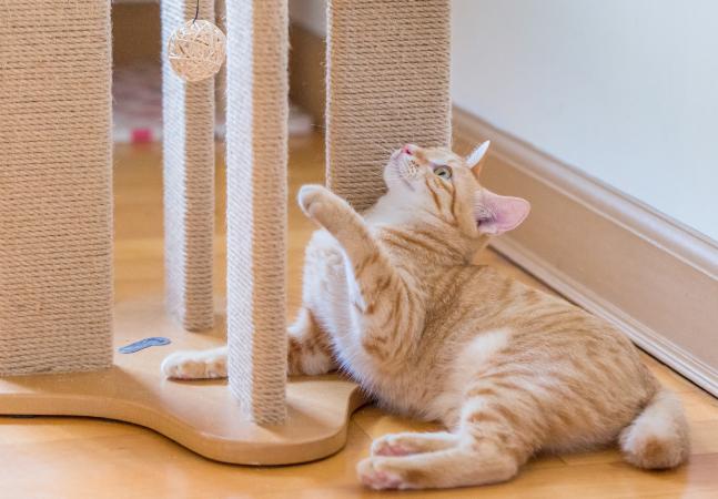 5 brinquedos para divertir o seu gato no fim do ano e em 2021