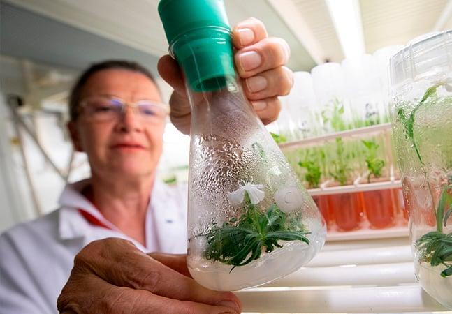 Como a ciência germinou uma flor de 32.000 anos