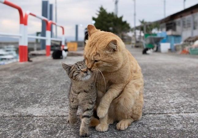 Fotógrafo registra gatos pelas ruas provando que os felinos são mesmo os reis do mundo