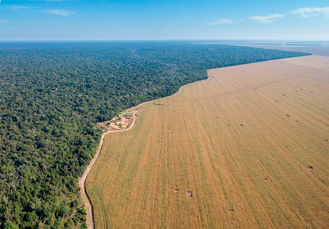 Reino Unido importou toneladas de soja fruto de desmatamento de florestas do Brasil; país acaba de banir a prática