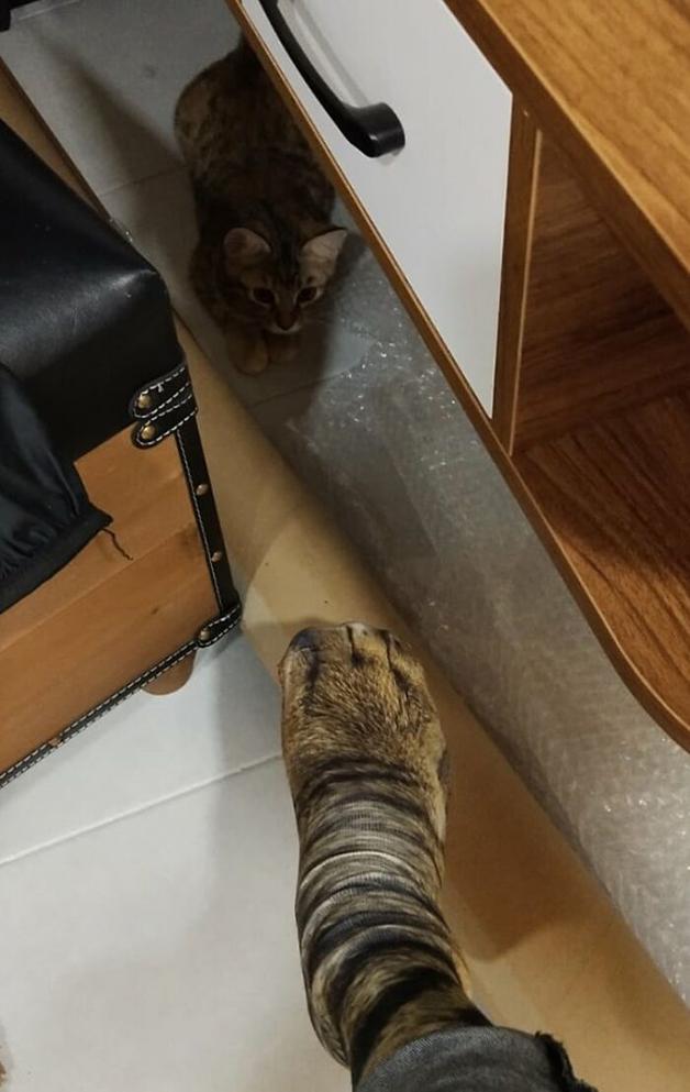Gato assustado diante de par de meias imitando patas de gato