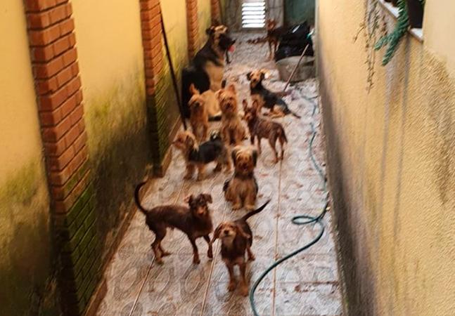 Homem é preso acusado de maus-tratos a cães que comiam fezes e restos de ração
