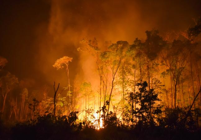 Emergência climática: extinção em massa e Terra pior do que se imagina, alerta ciência