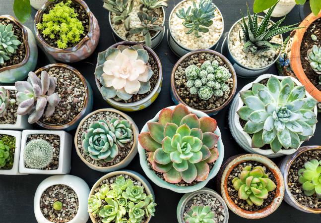 Vasos de plantas: 3 opções de recipientes para dar vida nova às suas suculentas