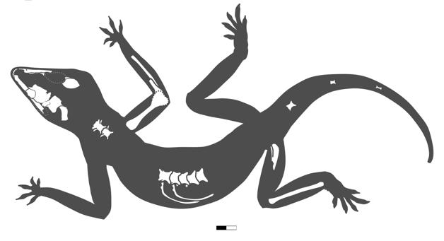 representação dos ossos do Karutia fortunata, lagarto pré-histórico descoberto no Piauí