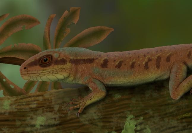 Réptil que viveu antes dos dinossauros e se parece com calango é descoberto no Piauí