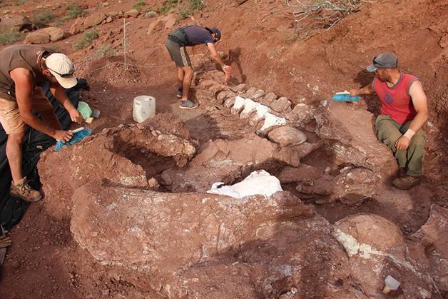 Parte da ossada da cauda de um titanossauro encontrada na Patagônia