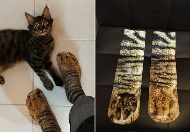 Gatos se assustam com meias que imitam suas patas e post viraliza