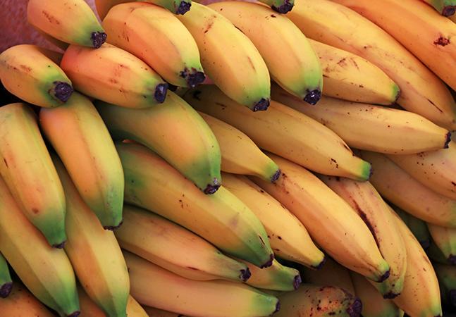 'Bananapocalipse': a banana como a conhecemos está caminhando para a extinção