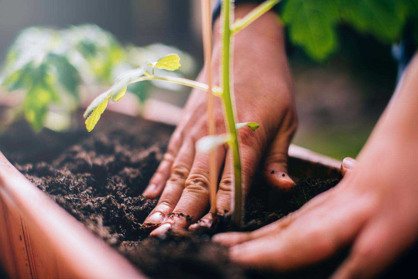 pessoa plantando uma muda
