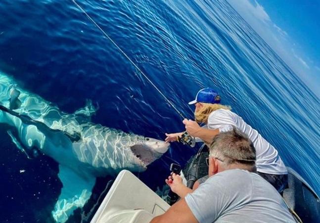 Tubarão branco que 'pediu' carinho na barriga ataca barco de pescador; veja vídeo