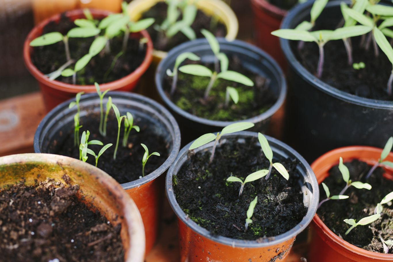 vasos com mudas de plantas