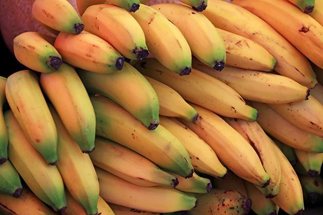 Cacho de bananas do tipo Cavendish