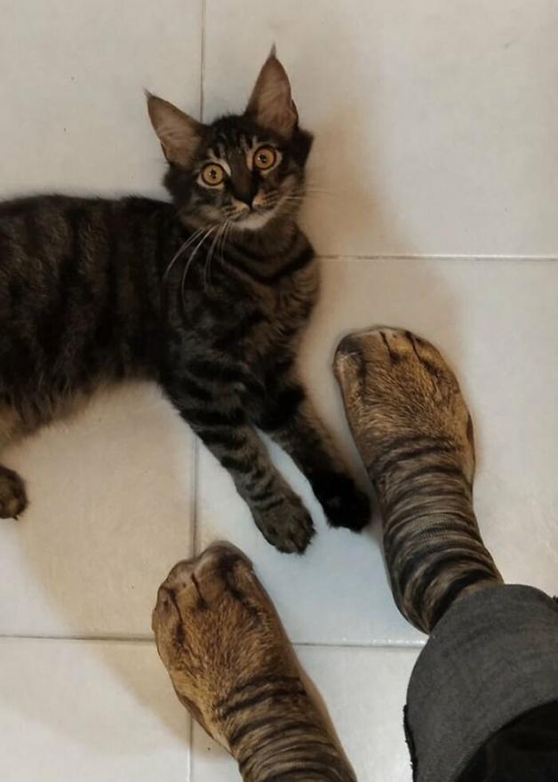 Gato espantado diante de par de meias imitando patas de gato