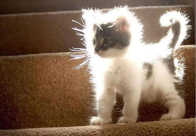 'Porque você deveria ter um gato' é tema de um perfil no Twitter que vai te convencer