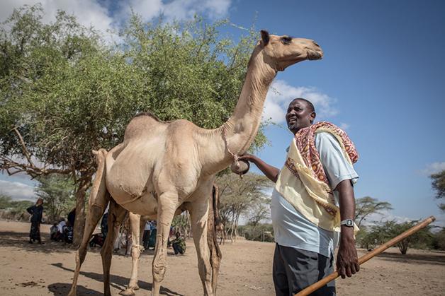 Um vendedor de camelo no Quênia