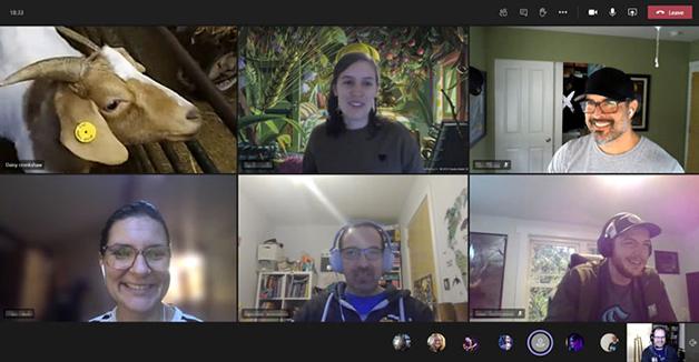 Cabra participando de videoconferência no Zoom