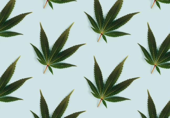 Estudo busca voluntários para tratamento com cannabis contra ansiedade e insônia