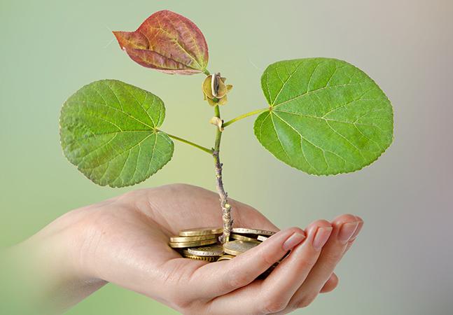 5 influenciadores que compensaram sua pegada de carbono em 2020