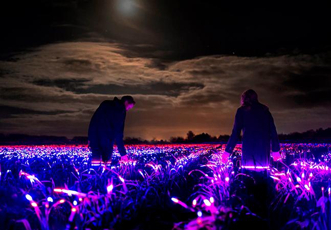 Sistema de luz ajuda plantação a crescer e transforma plantação em uma imensa obra de arte na Holanda