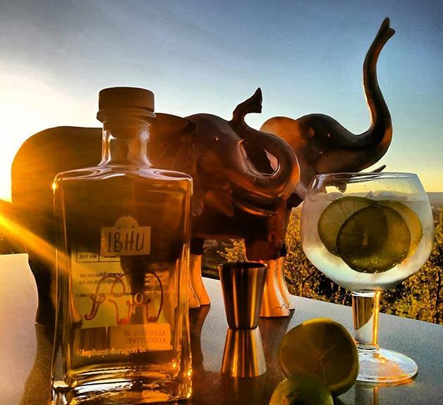 O gin Indlovu, feito do estrume de elefantes