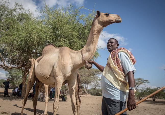 Camelos são apontados como possível vetor da próxima pandemia; entenda