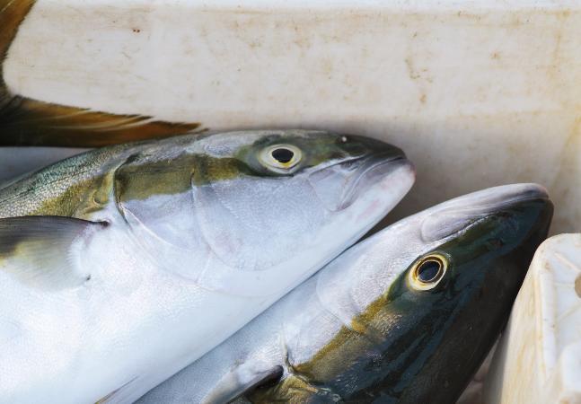 Irmãs com 'doença da urina preta' comeram peixe antes de internação, diz família