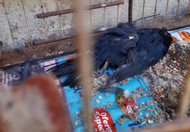 Ibama registrou 600 animais mortos em centro de tratamento do Rio de Janeiro