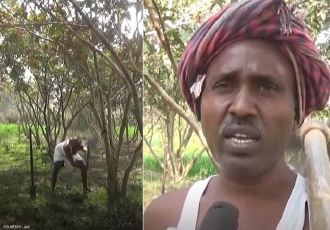 Indiano transforma terra árida em pomar com mais de 10 mil árvores